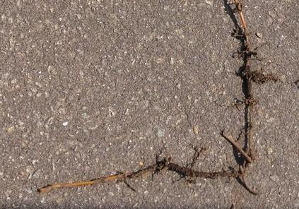 sugina_root