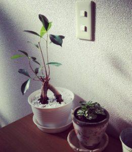 mini-Banyan05