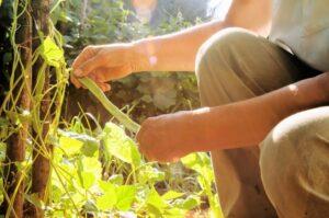 園芸療法3