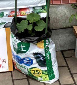 bag-plant02
