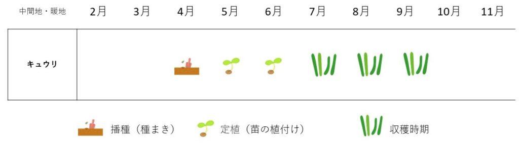 cucumber-cultivation plan