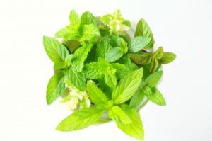 herbs-mint01