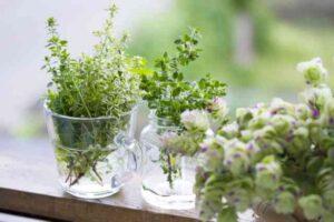 herbs-s03