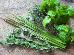 herbs-s04