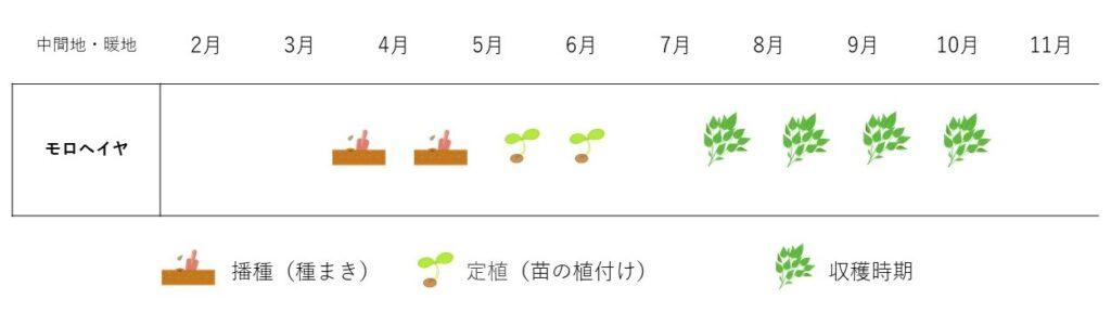 moroheiya-cultivation plan