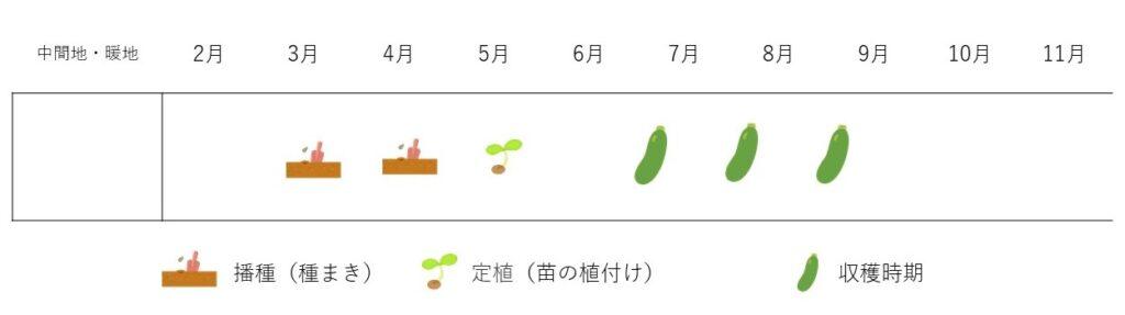 zucchini-cultivation plan