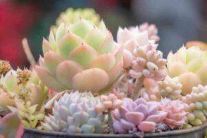 succulents-Groupplanting